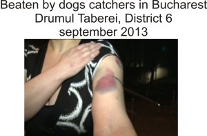 beaten by dogs catcher