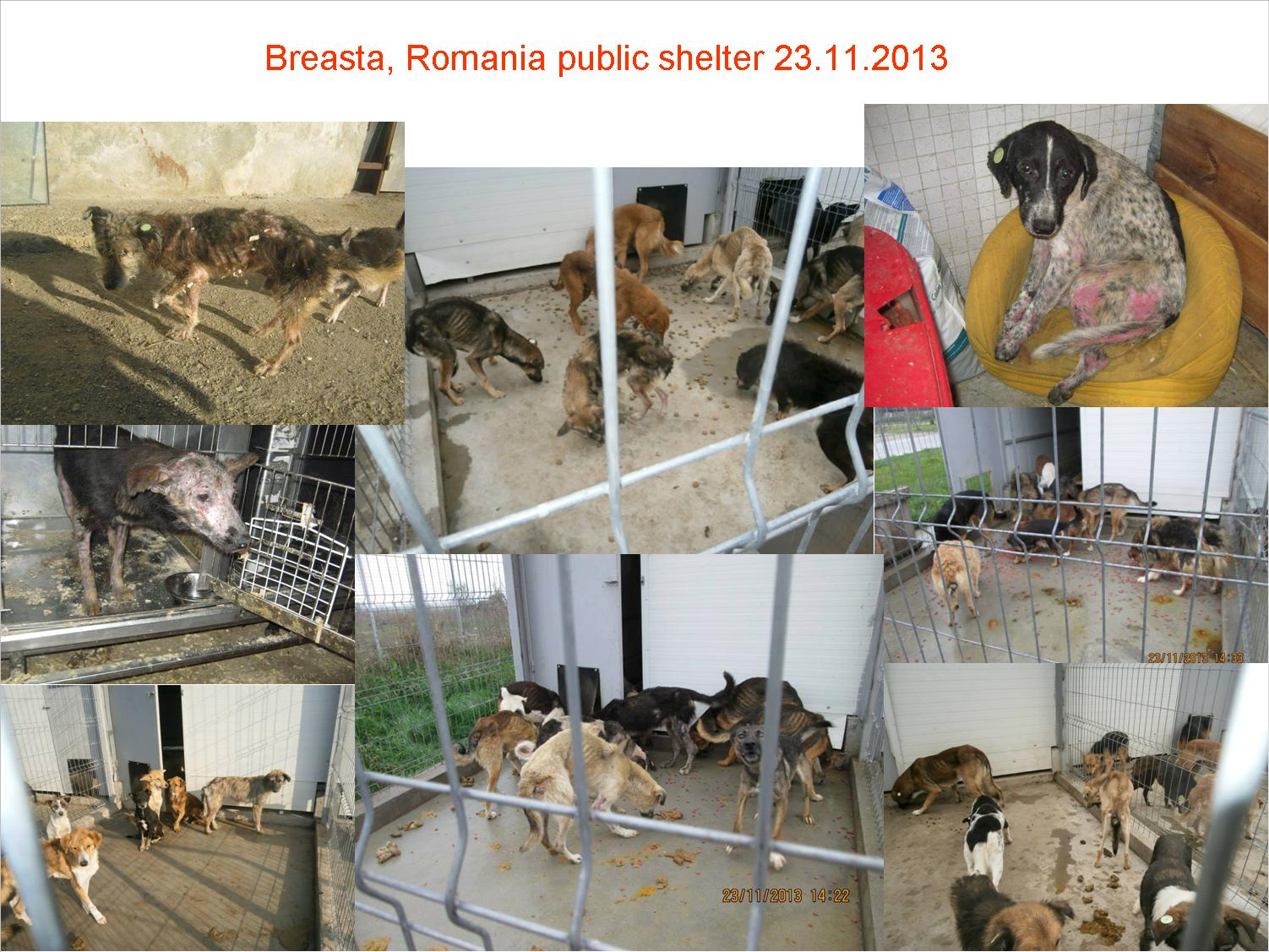 Breasta animal shelter in craiova romania dating - dating a man who lives with his parents