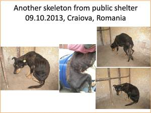 craiova-public-shelter