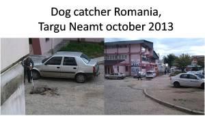 dog catcher Targu Neamt