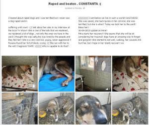 raped-dog-constanta