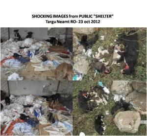 Targu Neamt public shelter 2012